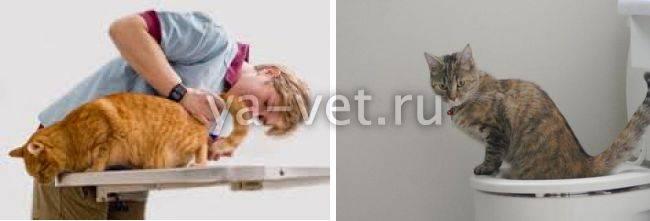 Причины кровавого поноса у кота