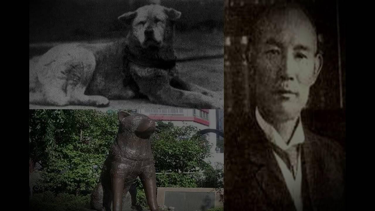Найдено фото легендарного Хатико