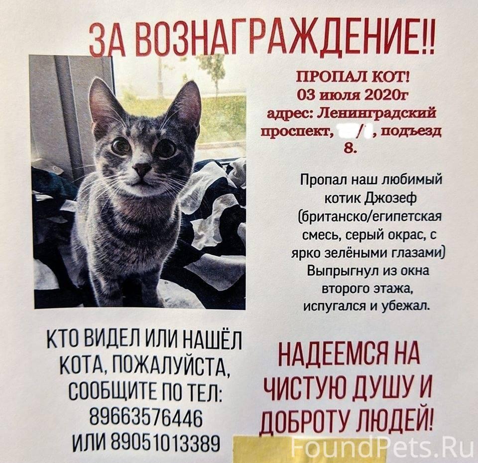Что делать если убежала кошка: как наиболее быстро найти на улице при потере