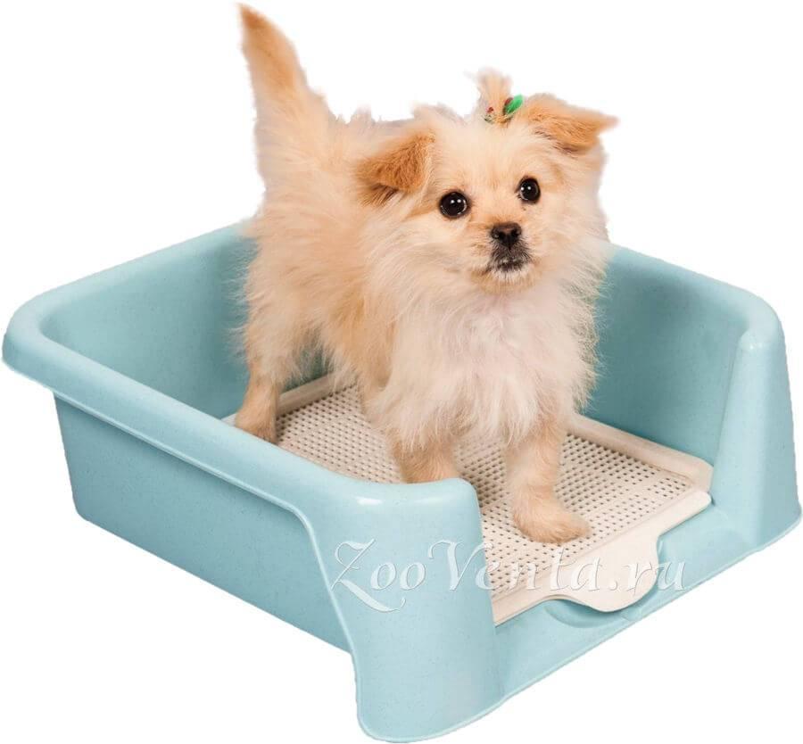 Лоток для собак мелких пород со столбиком