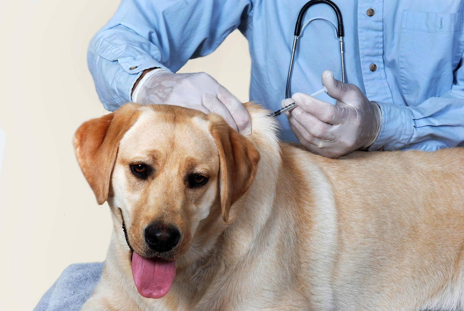 Гастроэнтерит у собак и кошек — симптомы и лечение заболевания