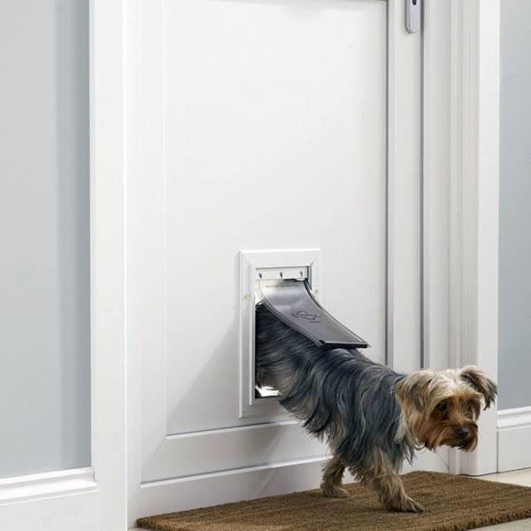 Лаз для кошки в дверь – котоход