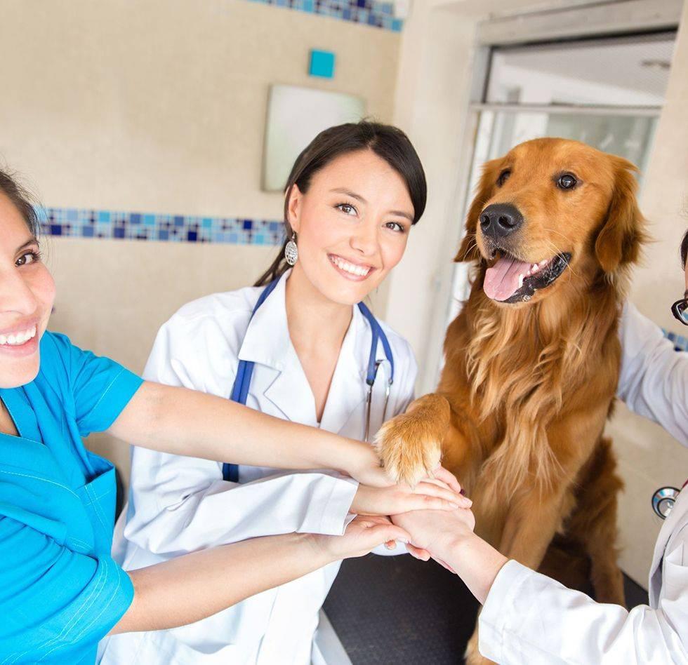 Московские ветеринары отвечают на частые вопросы о covid-19