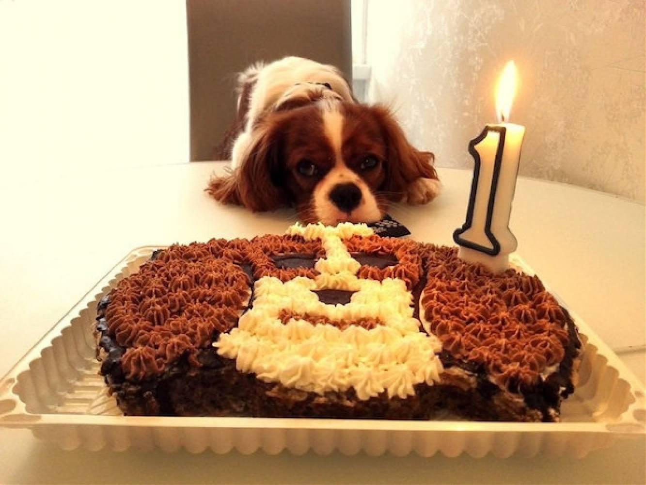 Я не заказываю торт питомцу на день рождения, а делаю сама по простым рецептам