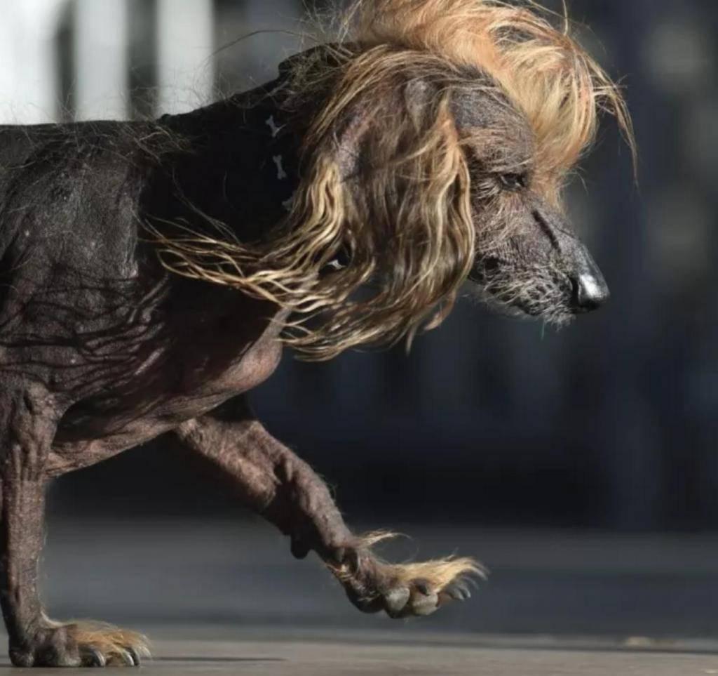 Самая страшная собака в мире | dog-care - журнал про собак