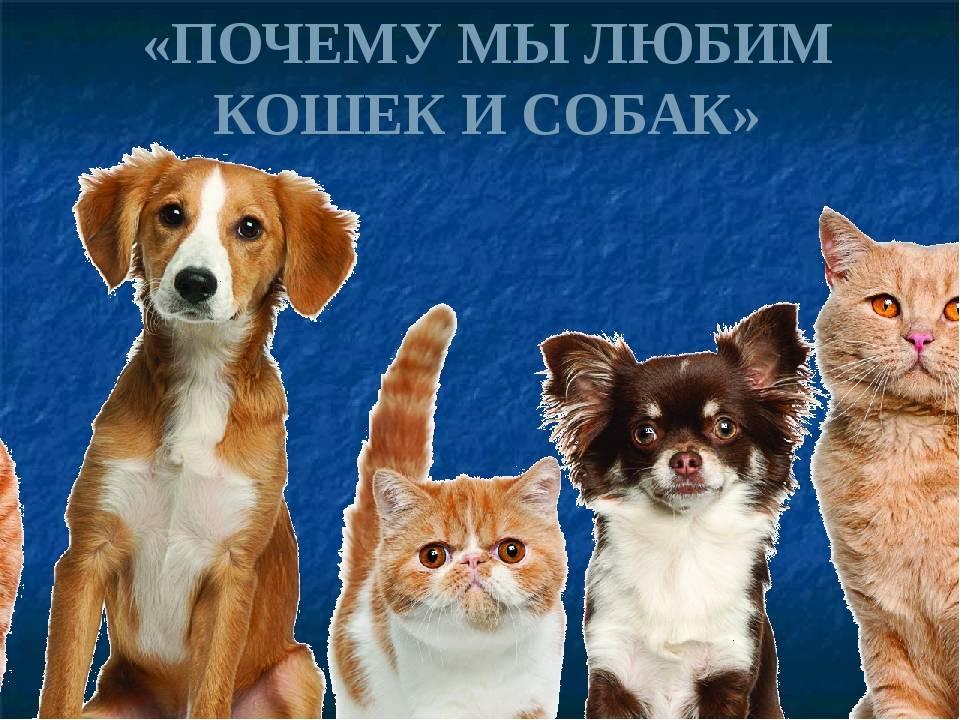 10 причин почему кошки лучше собак. кого лучше завести 10 причин почему кошки лучше собак. кого лучше завести