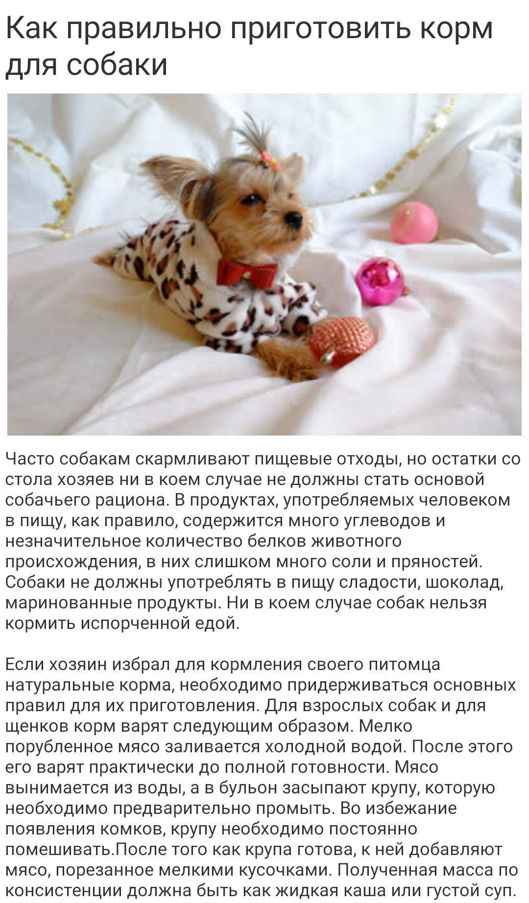 Уход за мопсом, содержание собаки