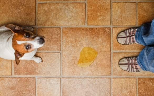 Как отучить собаку гадить дома