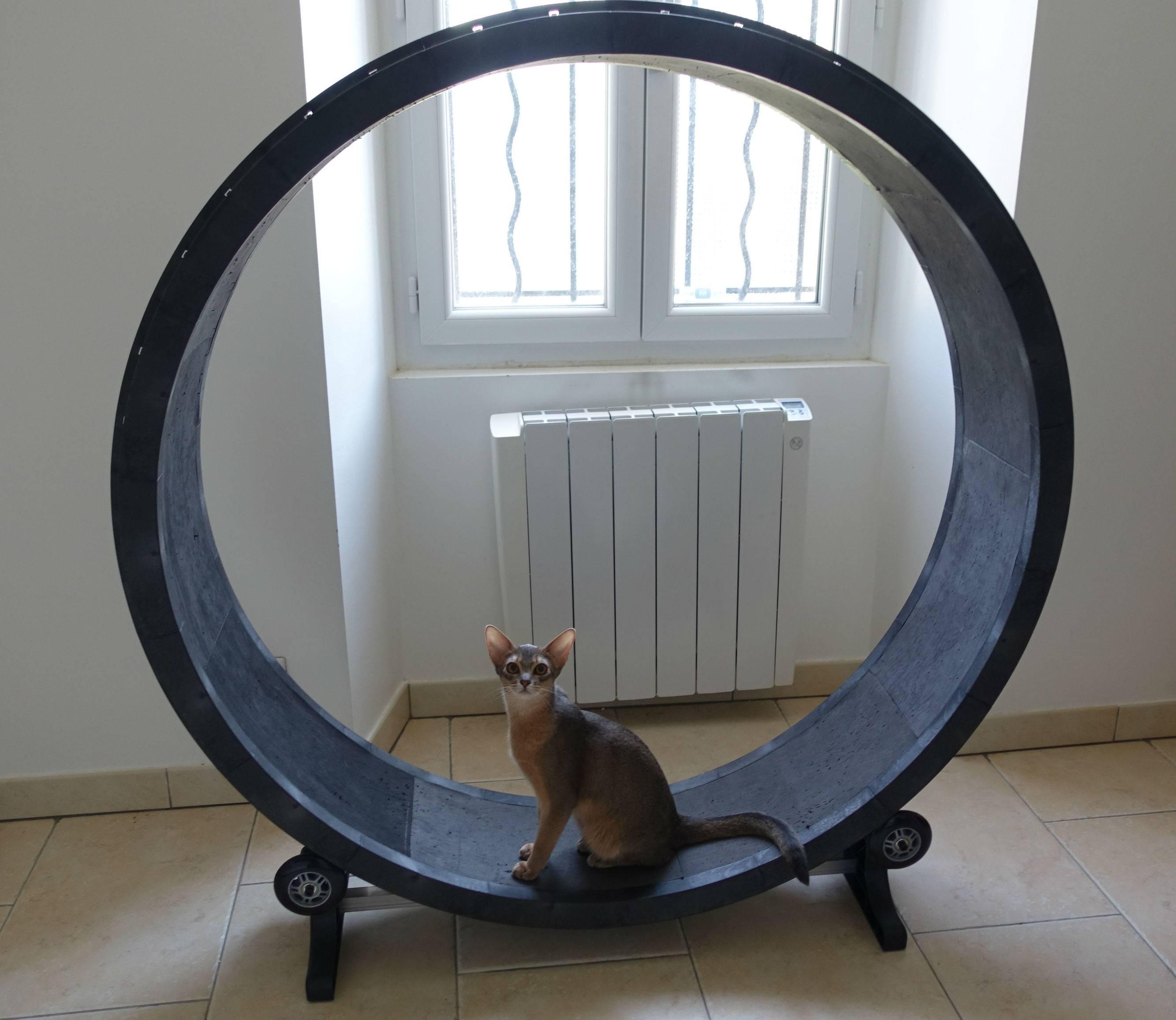Кошачий тренажер для бега – инструкция по самостоятельному изготовлению