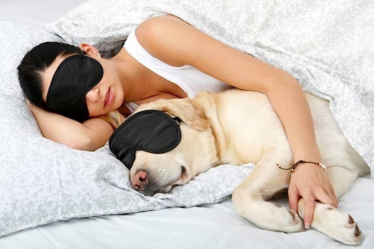 Можно ли спать в одной постели со своей собакой?