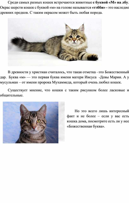 Анатолийская кошка - характер, уход, питание и болезни породы