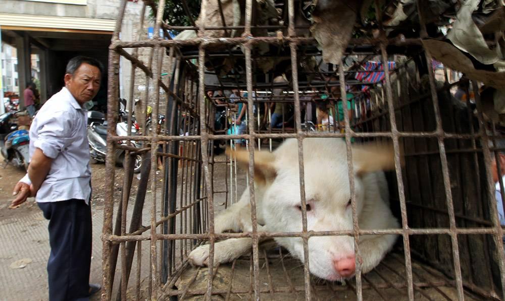 Где едят собак: в какой стране народ ест псов