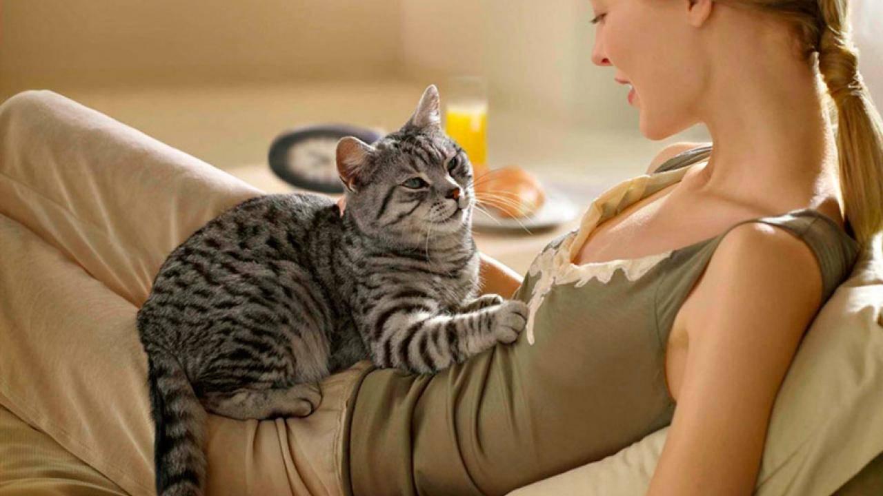 Массаж задних лап кошкам и коту: как правильно делать, зачем, видео