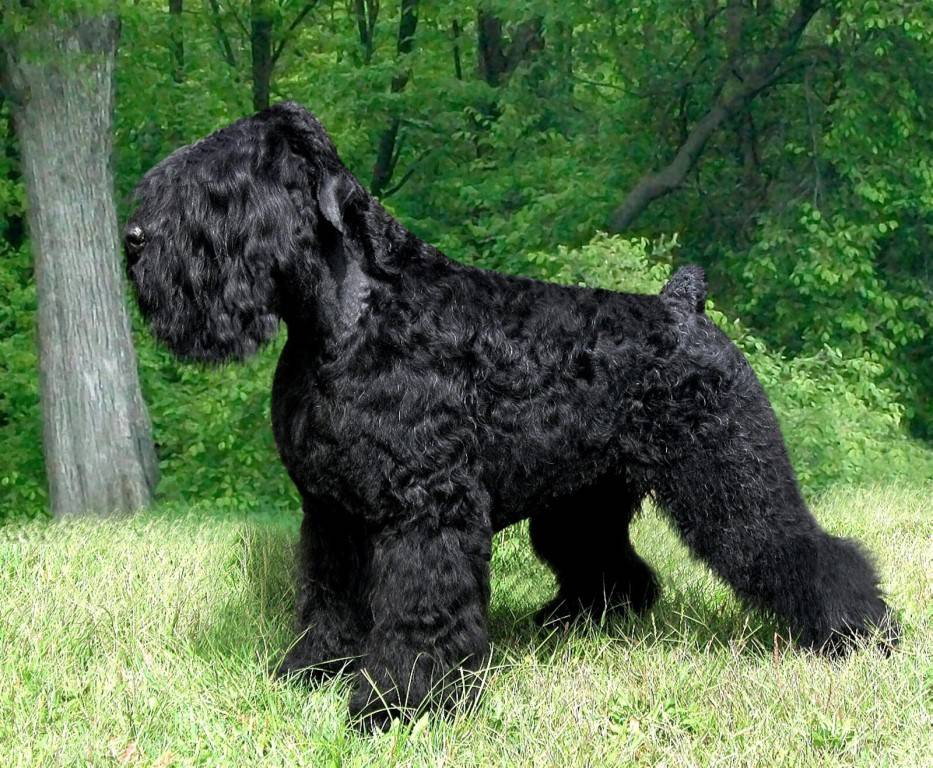 Какие породы собак выведены в россии
