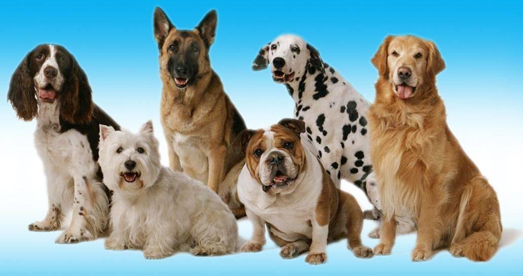 Какую породу собак лучше завести для разведения в домашних условиях