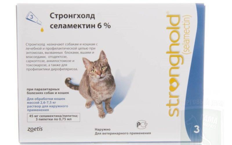 Холка у котов и кошек: зачем нужна, где располагается у разных пород, основные функции, возможные травмы, фото