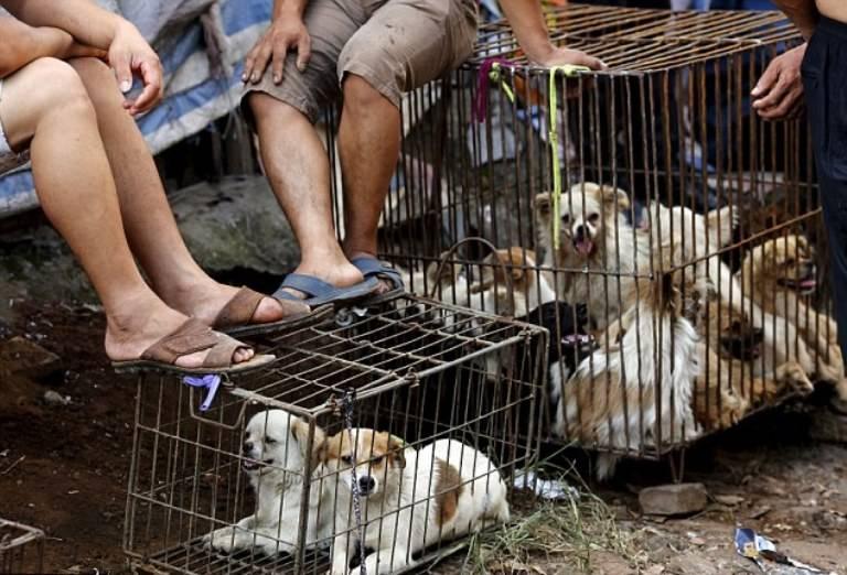 Не все корейцы едят собак | dogkind.ru