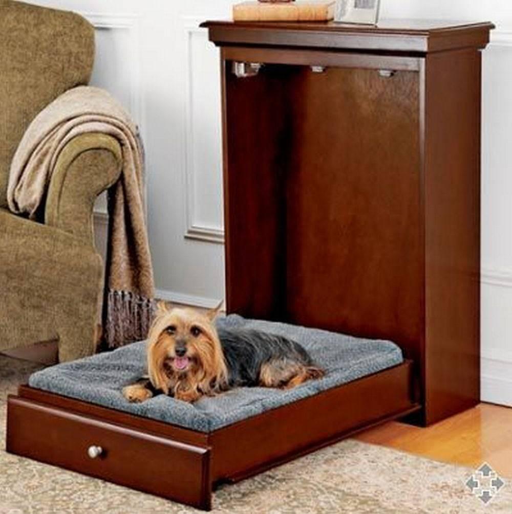 Пускать ли собаку на диван - секреты домашнего груминга