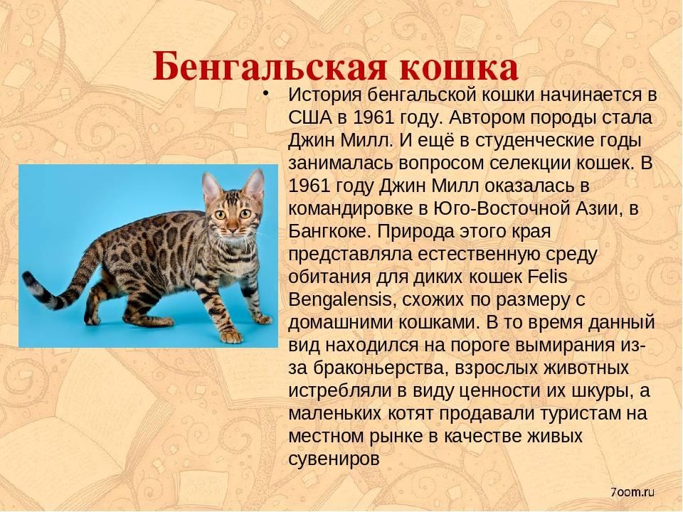 Ориентальные кошки, порода, описание, характер и особенности