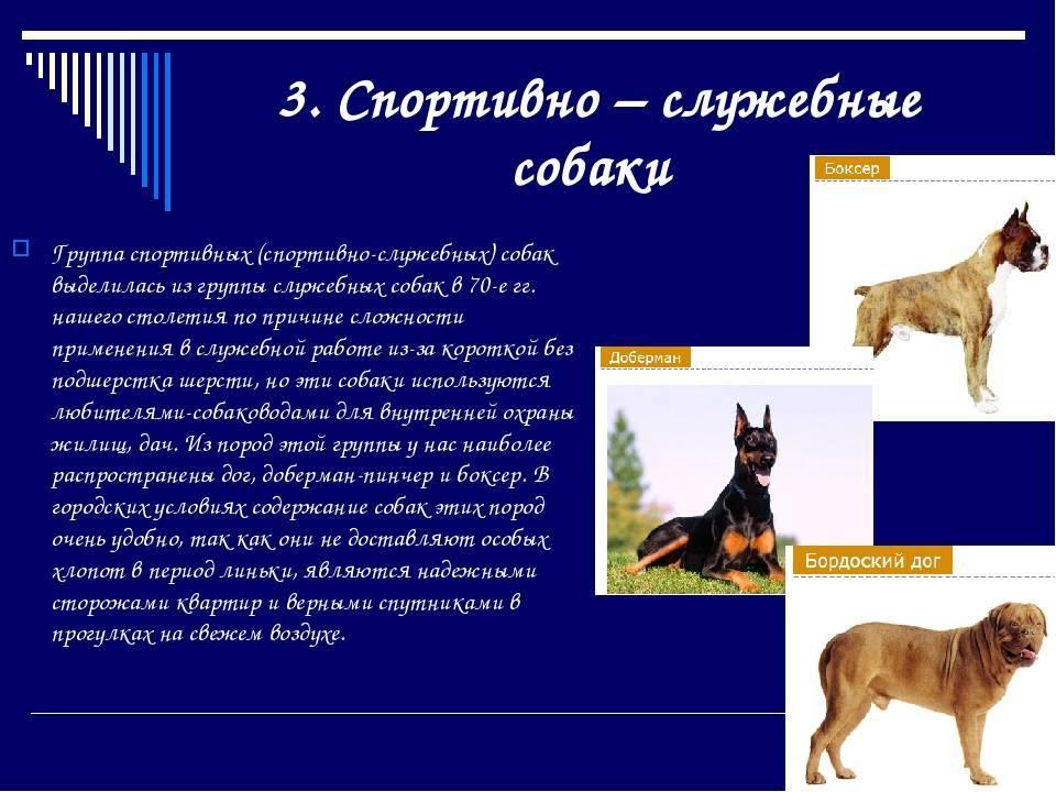 Племенное разведение собак. организация племенной работы