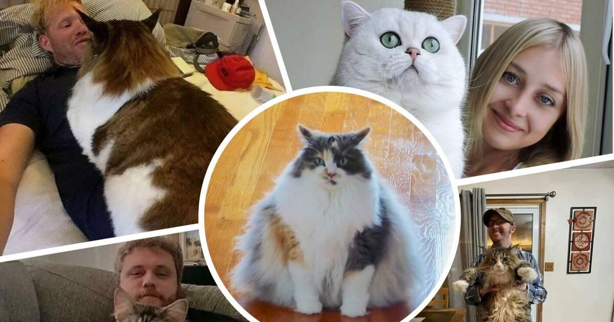 Самые необычные породы кошек, о которых вы, возможно, даже не знали - кошки, необычные кошки, экзотические кошки, домашние животные