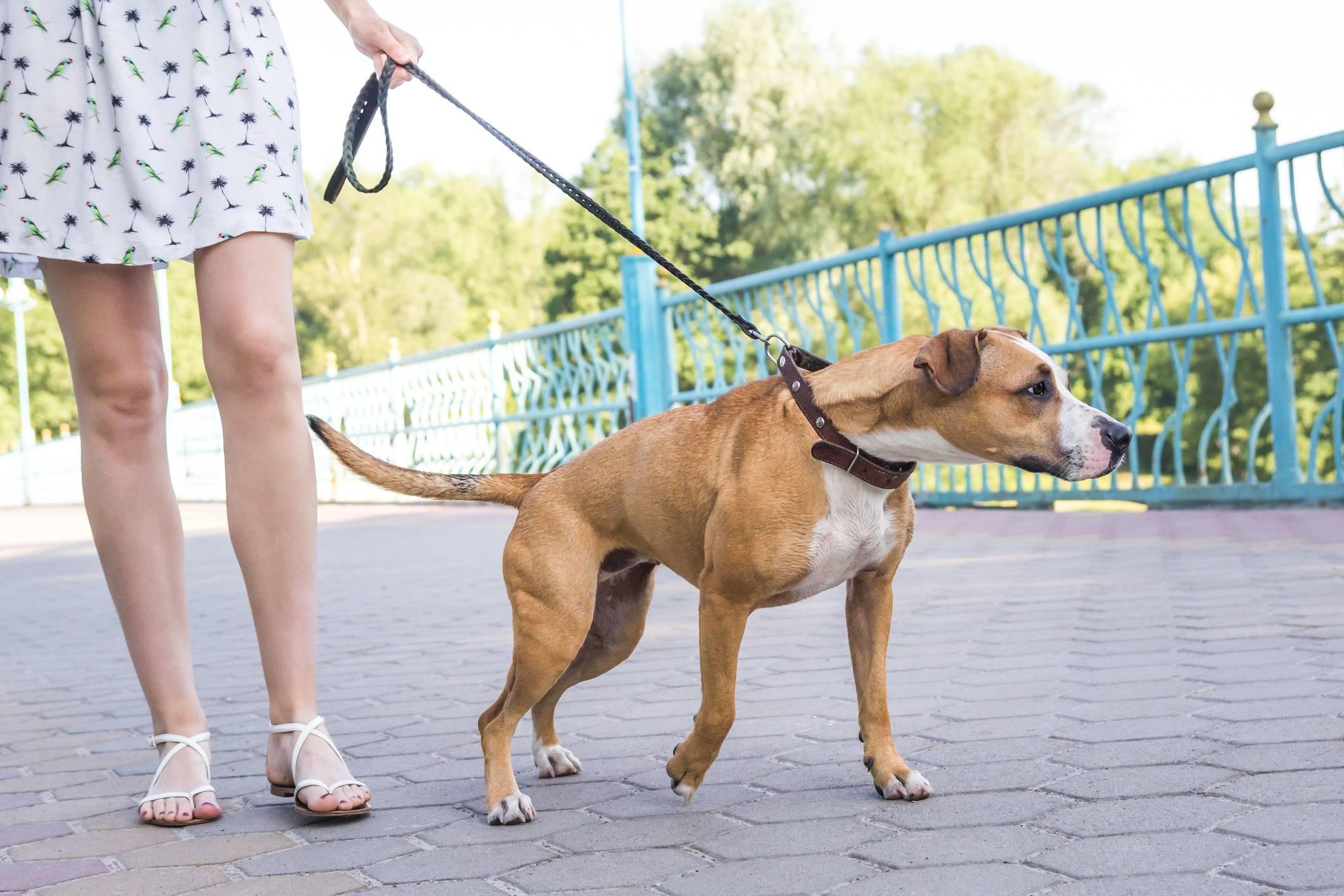 Как отучить собаку тянуть поводок: методы корректировки поведения