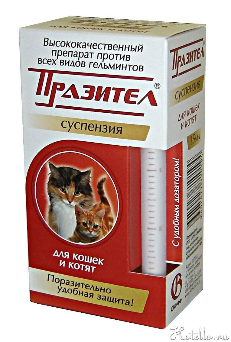 """Глисты у котенка: что делать, лечение и профилактика   блог ветклиники """"беланта"""""""