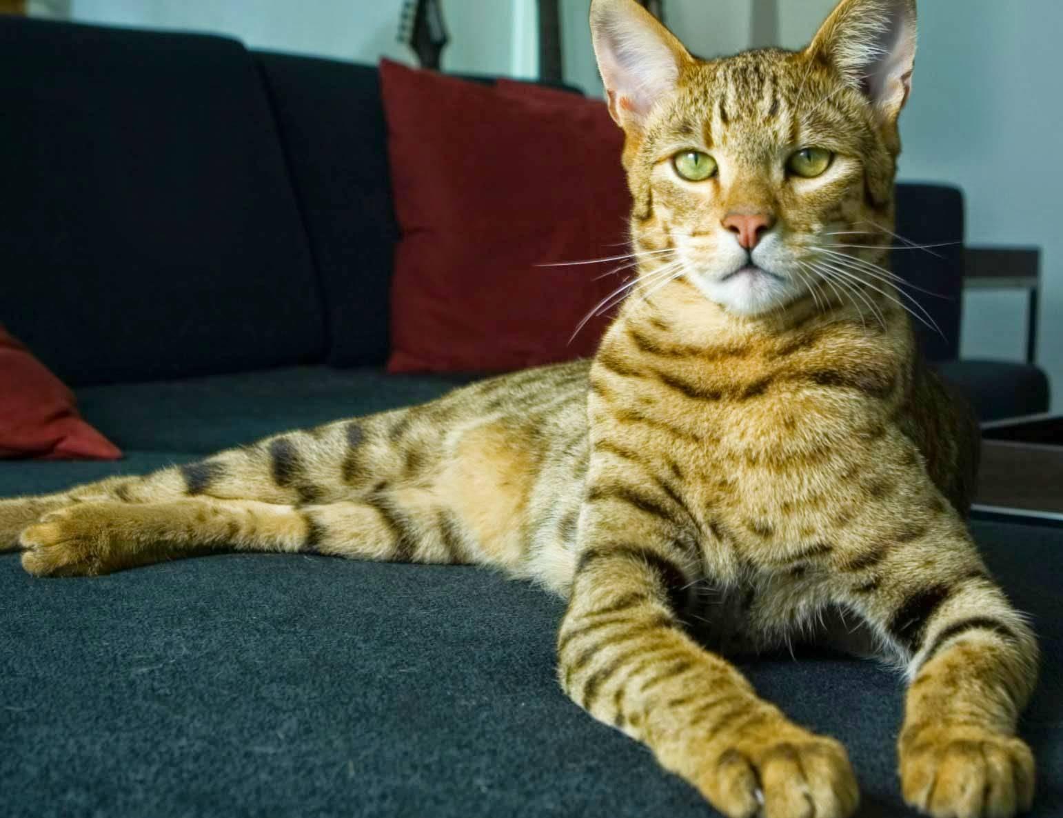 Выбираем пол животного: кто лучше кот или кошка?