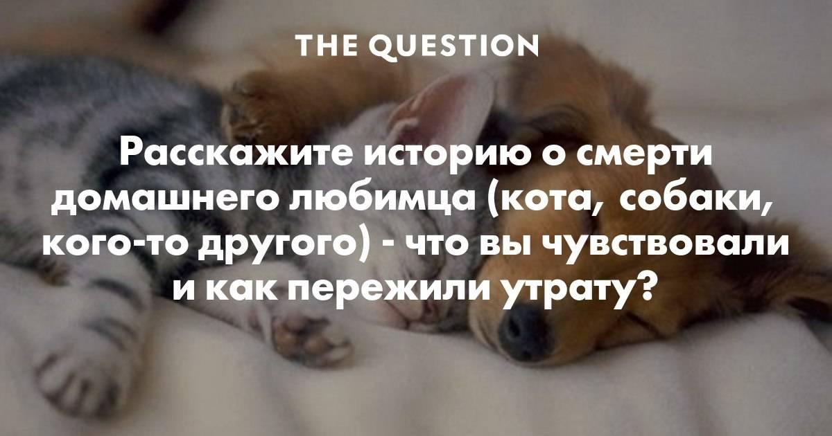 Как помочь умирающей кошке?