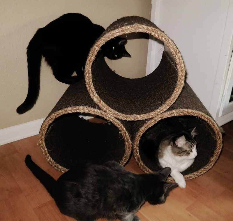 Действительно ли нужна вторая кошка в доме