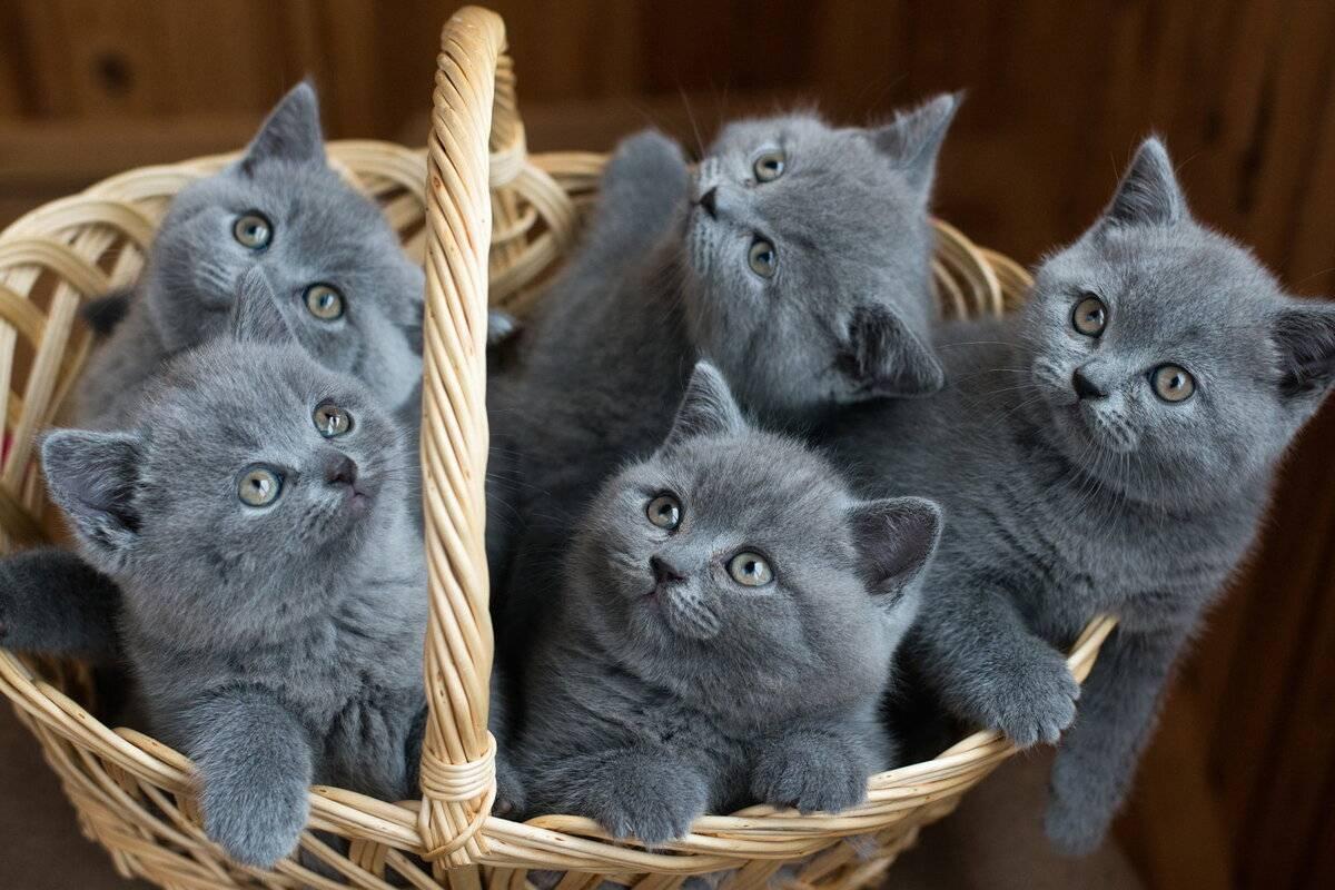 ᐉ клички для котят-мальчиков по алфавиту - ➡ motildazoo.ru