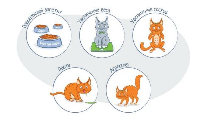 Как понять беременна ли кошка: признаки, сколько длится?