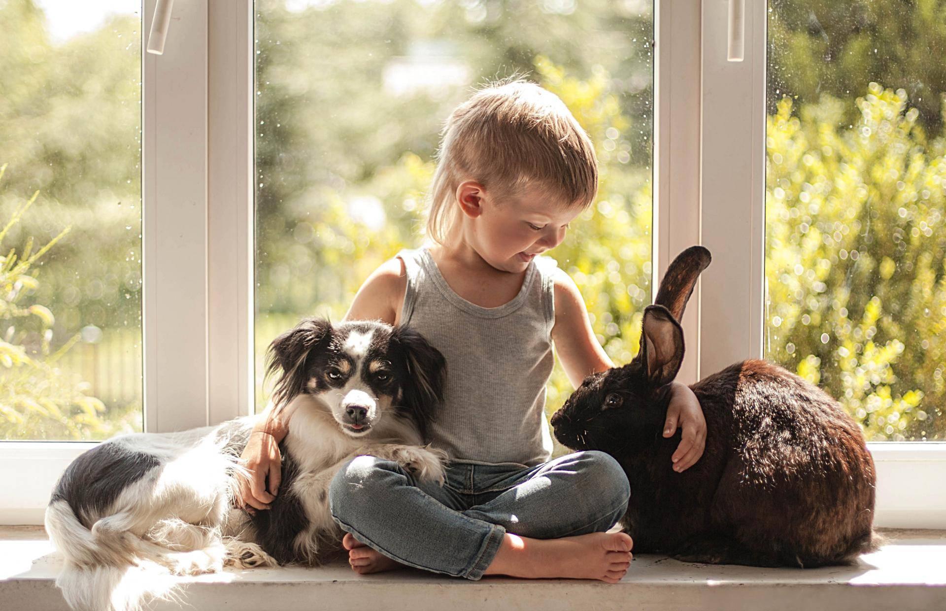 Вежливый питомец у вас дома: рассматриваем проблемы воспитания собак и учимся их решать