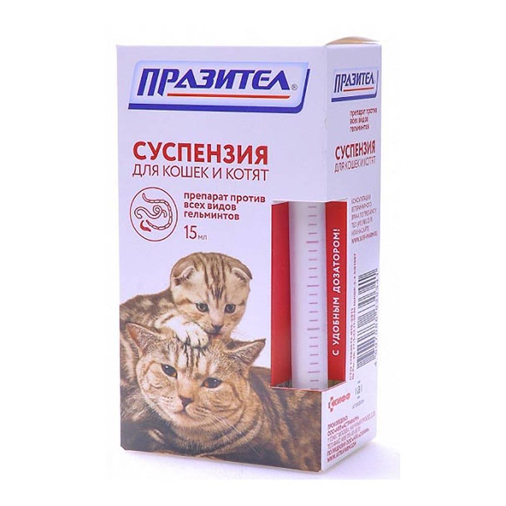 Что делать, если у беременной кошки появились глисты?