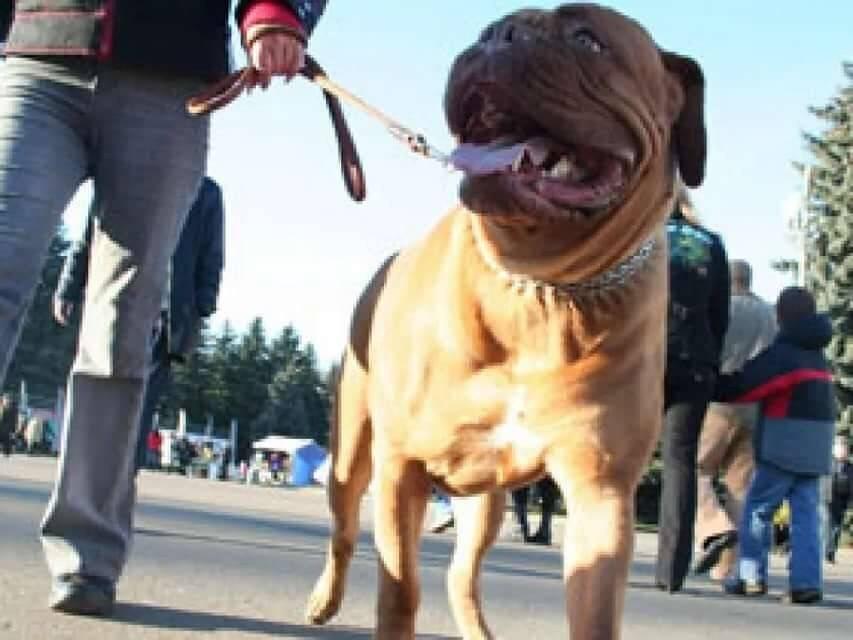 Что будет, если гулять с собакой без намордника