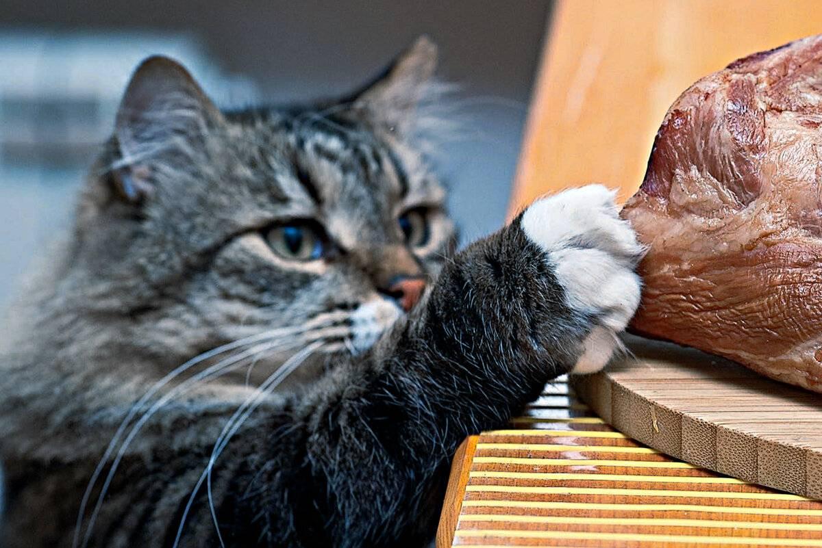 Чем кормить кошку в домашних условиях: рацион натуральной, сухой и жидкой еды, основы правильного кормления