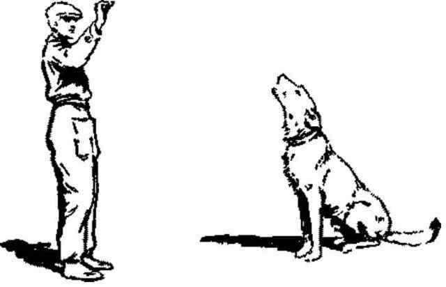 Как научить собаку команде фас | обучение