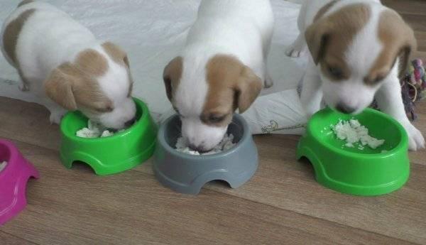 Можно ли собаке давать молоко?