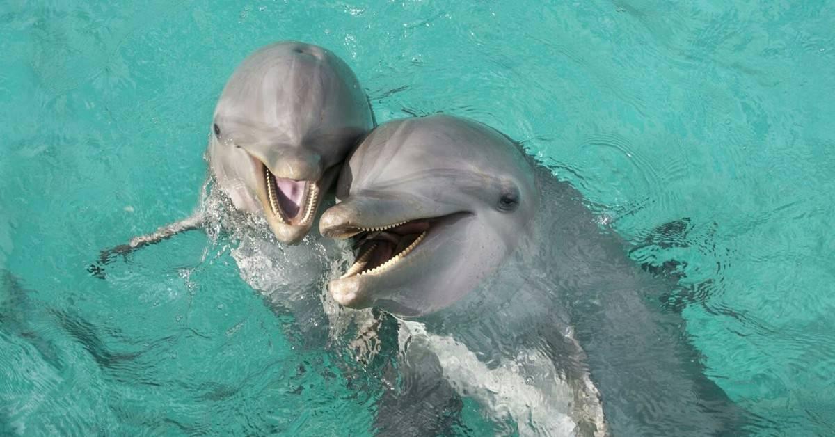 Почему люди любят дельфинов?