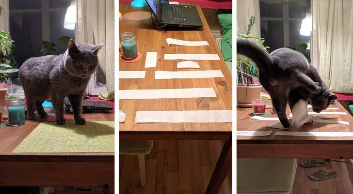 Как отучить кота шкодить и портить вещи: советы фелинолога