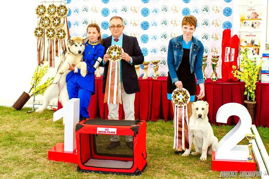 Правила записи собак на выставку: сроки, порядок, документы