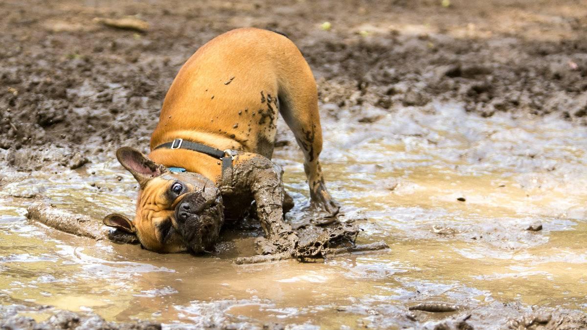 ᐉ почему собаки валяются в тухлятине? - zoomanji.ru