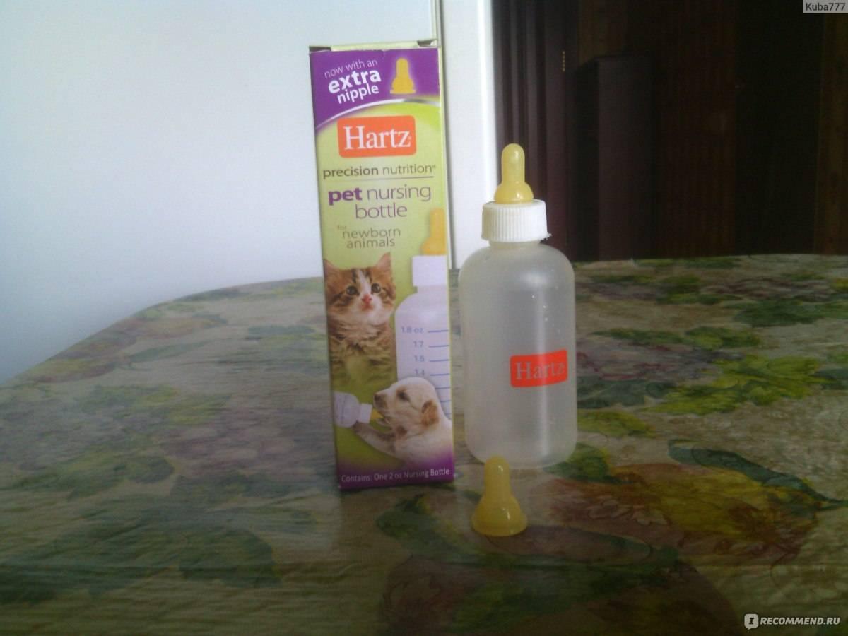 Как выкормить котенка без кошки: секреты молочного рациона для малышей