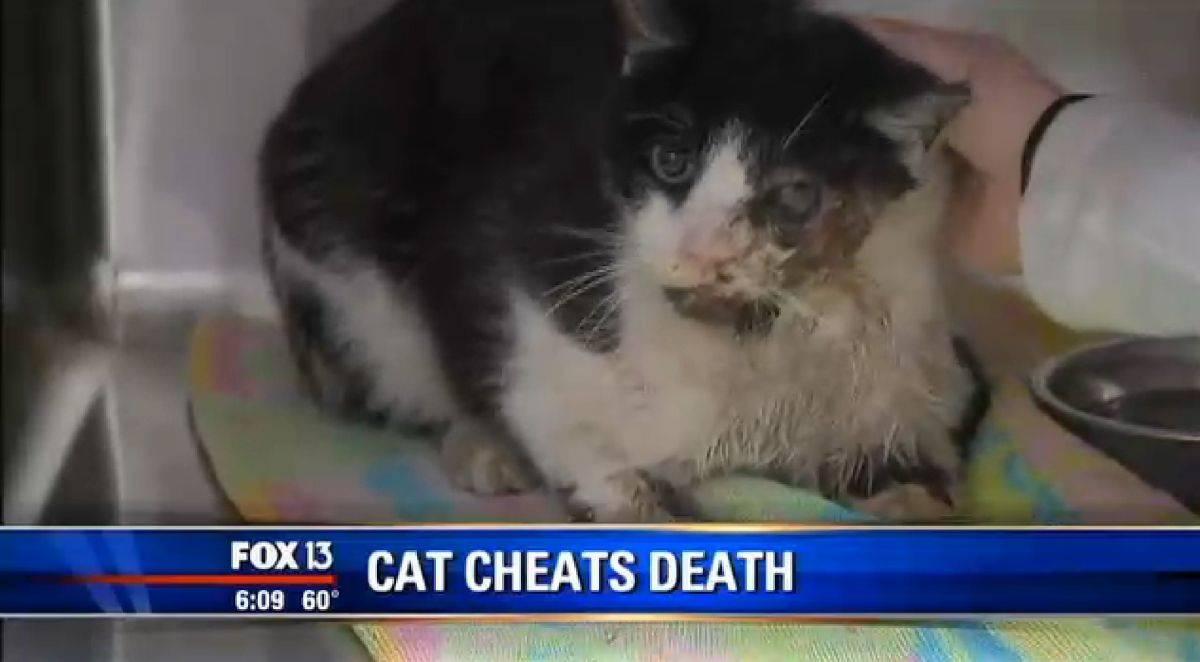 Как похоронить кота: возможные варианты