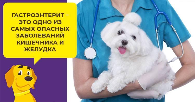 Коронавирусный гастроэнтерит у кошек и собак: симптомы, диагностика, лечение