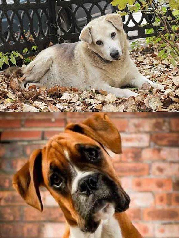 Почему собаки наклоняют головы?