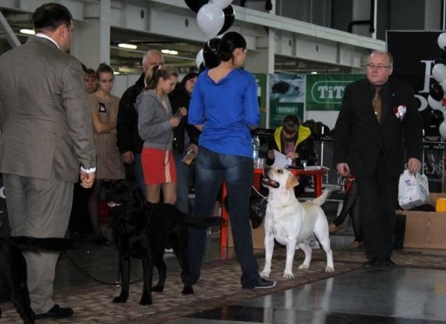International dog show cacib – fci / интернациональная выставка собак cacib – fci г. ростов-на-дону