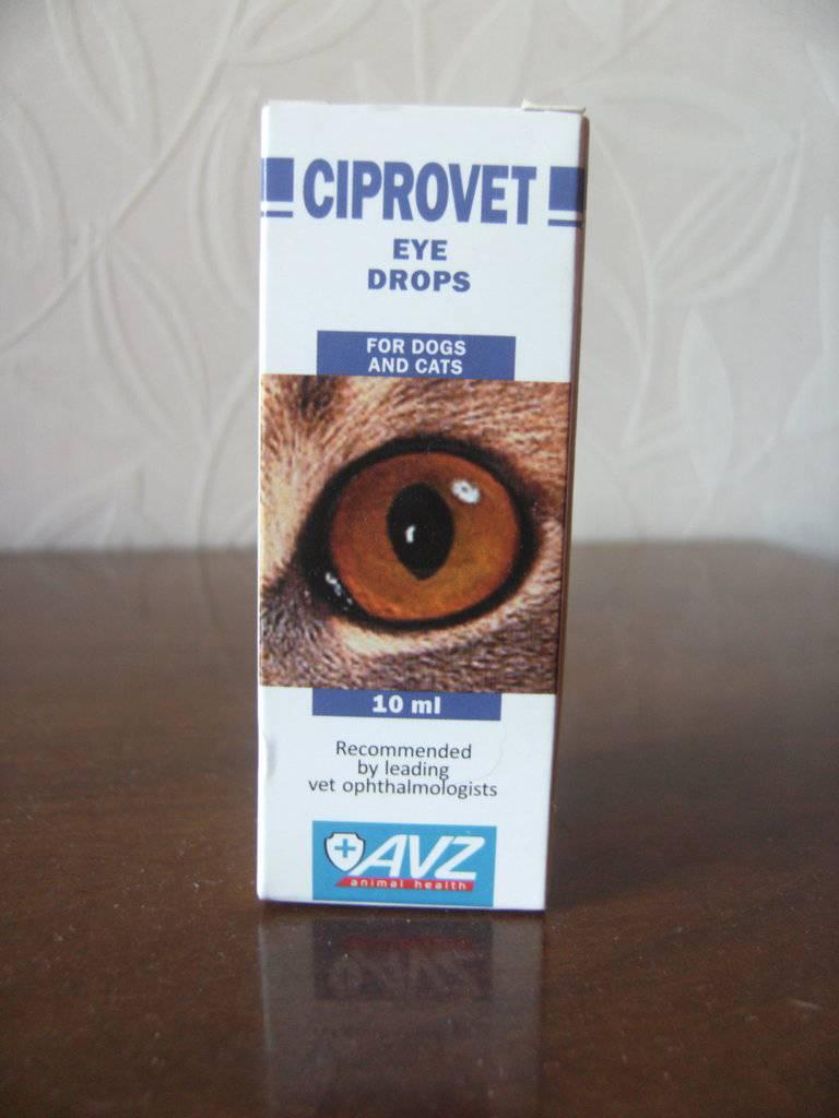 Ципровет для кошек – эффективный антибиотик