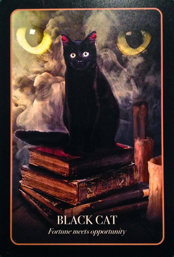 Камень кошачий глаз: магические свойства и знаки зодиака