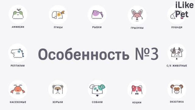 Стрижка когтей у  кошек и котов на дому в москве